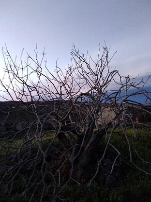 エトナ山麓、ブロンテのピスタチオ農家訪問