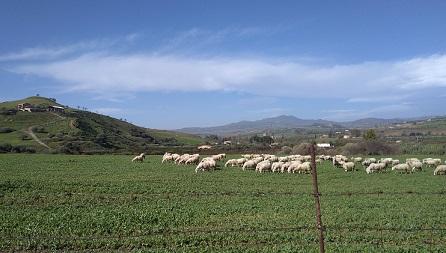 シチリアのエンナ近郊チーズ工房訪問