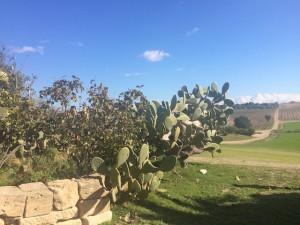 隠れた醸造施設があるノート郊外のワイナリーPlaneta