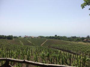 シチリア島の有名ワイナリーを訪問
